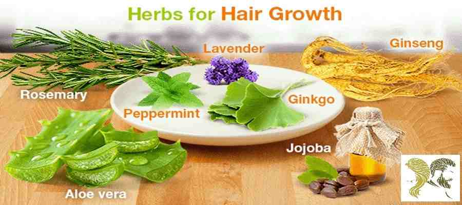 20 Best Herbs For Hair Growth And Thickness