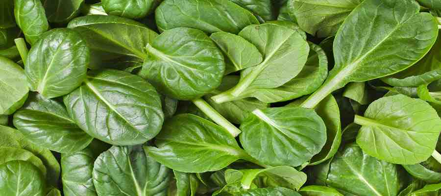 vitamins for hair growth and thickness - spinach