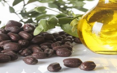 Best Benefits Of Jojoba Oil For Hair Growth And Thickness